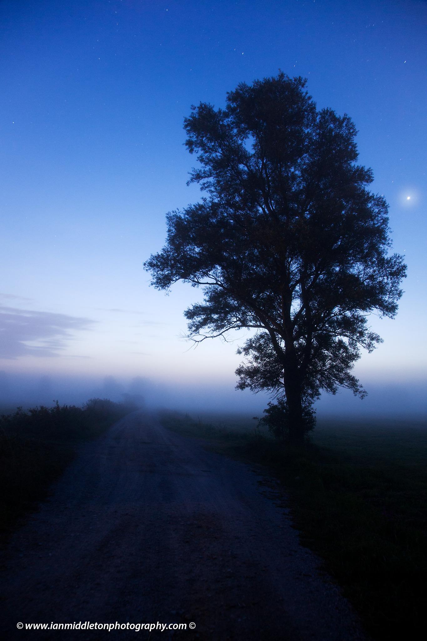 Venus rising at dawn